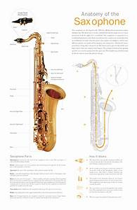 Anatomy Of The Saxophone On Behance