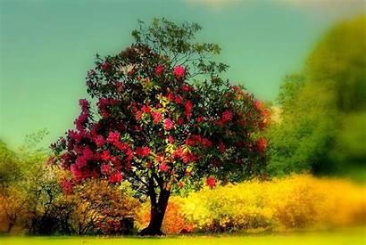 Tree Trees Wallpapers Fruit Nature Background Desktop