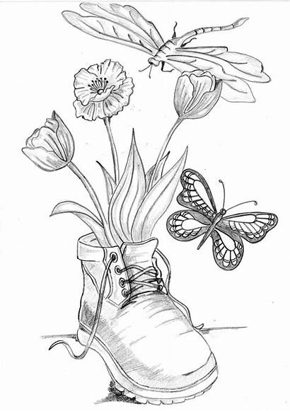 Drawings Butterfly Dragonfly Flowers Coloring Pencil Boot