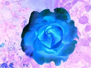 Neon Colors Rock images Neon Roses wallpaper and ...