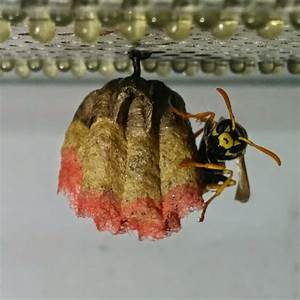 Nid De Guepe Dans Le Sol : un nid de gu pes color 2tout2rien ~ Dailycaller-alerts.com Idées de Décoration