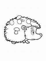 Hedgehog Coloring Animals Printable Mycoloring sketch template