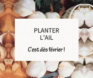 Planter Ail Rose : planter l 39 ail les conseils pour votre jardin de willemse france ~ Nature-et-papiers.com Idées de Décoration