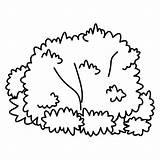 Bush Bushes Coloring Drawing Clipart Outline Plants Pages Clip Shrubs Kid Tree Fungi Downloads Cartoon Easy Template Cliparts Fensterbilder Malvorlagen sketch template