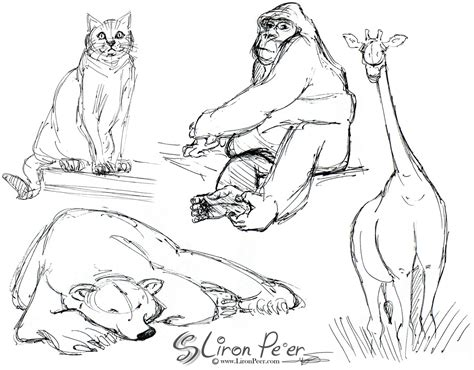 liron peer animation cleanup character design