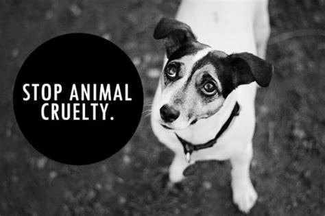 groups raise animal cruelty awareness  student printz