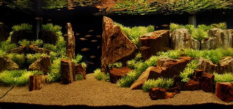 Wood For Aquascaping by Ohko The Planted Tank Forum