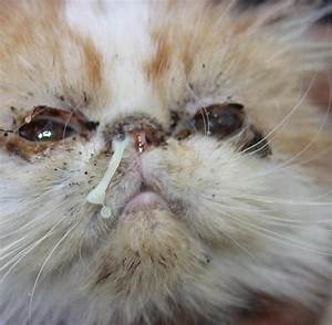 Katze Im Haus Halten : tierqu lerei katzen z chterin h lt 65 verwahrloste tiere ~ Lizthompson.info Haus und Dekorationen