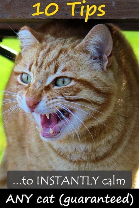 calm cat cats calming behavior any most