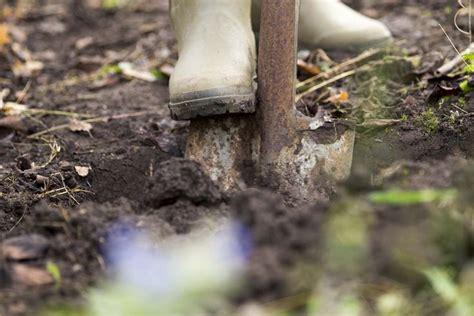 Pilze Im Garten Bodenbeschaffenheit by Blaubeeren Pflanzen So Legt Ein Blaubeerbeet Im