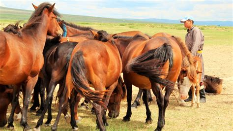 nomadic mongolia rhythms explore cultures herders spend rich