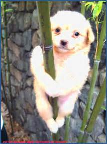 Dogs That Dont Shed Or Grow by Small Dogs Breeds Dogs Pet Animals Photos