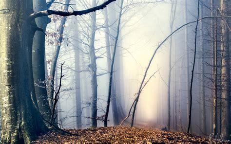 amazing forest hd desktop wallpapers  hd