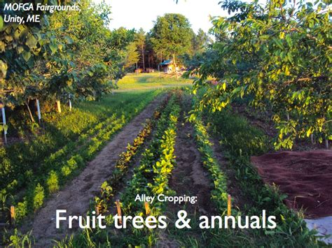 design appleseed permaculture