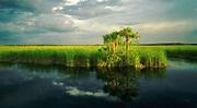 Everglades, Estados Unidos: Una joya ecológica - Duna 89.7 ...