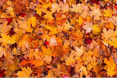 Leaves Autumn Leaf Backgrounds Background Border Fall