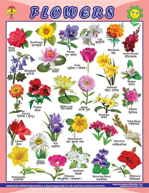 flowers names different types of flowers with names chart www imgkid com the image kid has it