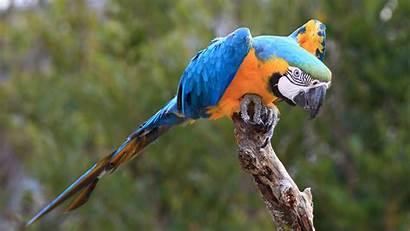 Macaw Bird Parrot Google Birds Yellow 4k