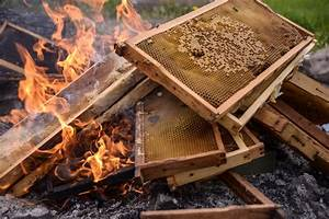 Diagnosing And Treating American Foulbrood In Honey Bee