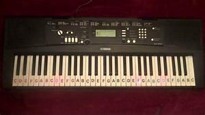 Abcdefg Notes On Keys Yamaha Ez 220 Light Up Keyboard