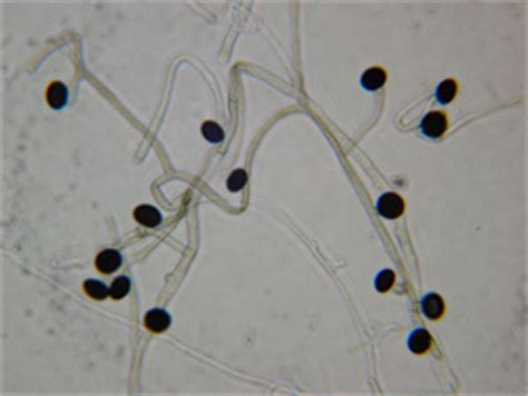 fungal photo gallery