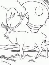 Elk Coloring Pages Mountain Rocky Printable Mountains Clipart Colour Clip Sheets Library Deer Winter sketch template