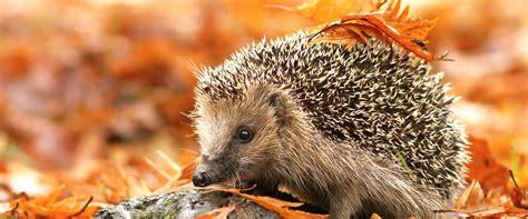 Igel Im Garten Herbst by Igel Unsere Stacheligen Freunde Liebe Deinen Garten