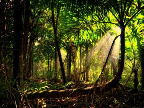Cool Baby Animal Wallpapers Beautiful Rainforest Backgrounds Wallpaper Pictures