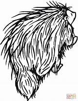 Porcupine Coloring Porcupines Pages North American Printable Drawing Clipart Cute Categories Getcoloringpages Supercoloring sketch template