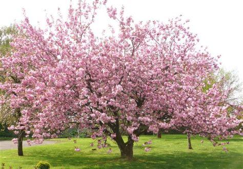 Garten Gestalten Obstbäume by Obstb 228 Ume Richtig Pflanzen Bauemotion De