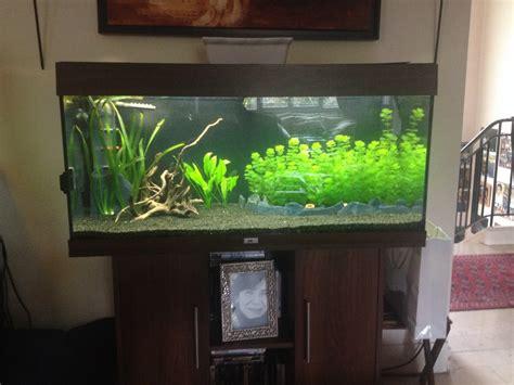 aquarium 400 litres occasion d 233 marrage aquarium juwel 180 quelle quantit 233 de substrat mettre