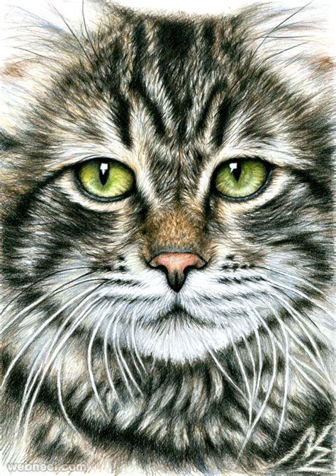 animal drawing cat nicolezeug  preview