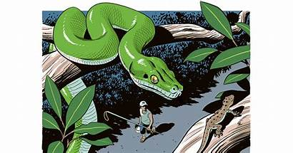 Science Pet Python Reptiles Wildlife Wild Illegal