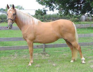 Palomino Horse Breed