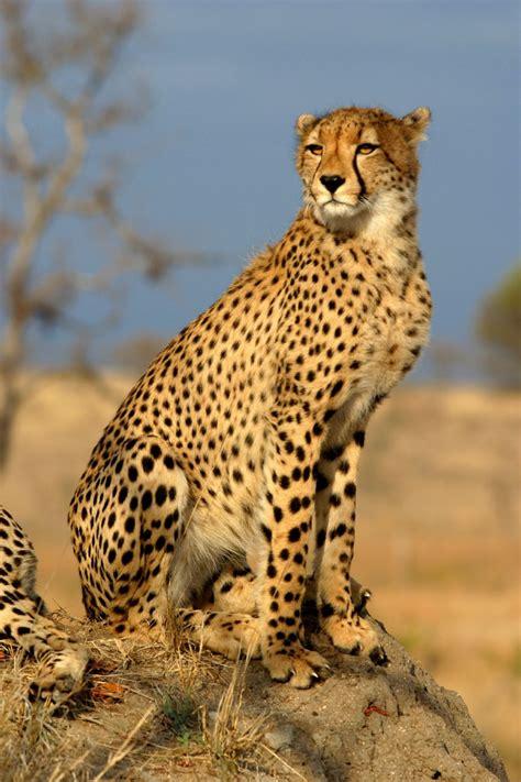 Wildlifefotografie Wikipedia