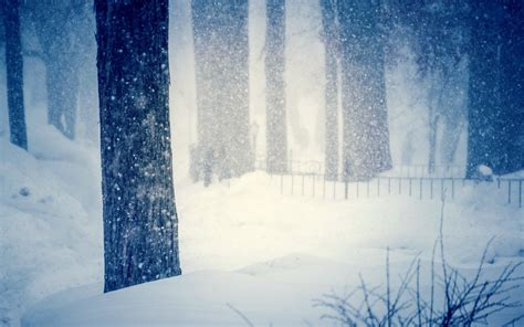 Nature Tree Winter Snow Snowflakes Cool Blur Drifts Trees