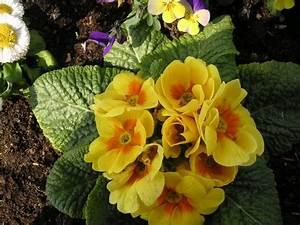 Was Sind Frühlingsblumen : dieses foto zeigt die fr hlingsblumen der stadt saarbr cken das foto habe ich am 16 0 ~ Whattoseeinmadrid.com Haus und Dekorationen