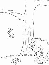 Coloring Castor Beaver Animals Disegni Castoro Coloriage Woodland Colorare Beavers Animali Template 1629 Valentines Castori Coloriages Templates Dessin Vari Elementary sketch template