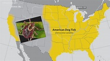Why You Need To Watch Out For Rocky Mountain Spotted Fever ...