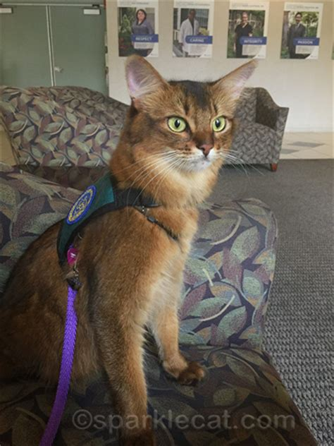 therapy cats therapy cat thoughts sparklecat