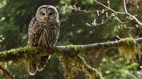 Where Do Owls Live?