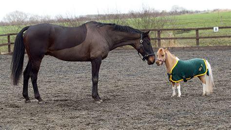cavalli nani falabella mini pony 20   KEBLOG