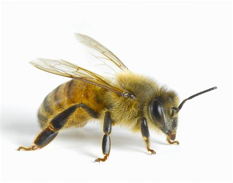 Scientists Create A Pesticide That Won't Kill The Bees—and