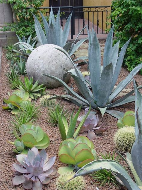 landscaping succulents landscaping with succulents landscaping network