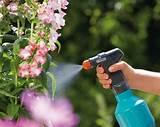 Огородные растения от диабета