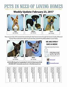 dog adoption flyer template - weekly pet flyer dog biscuit day humane society of