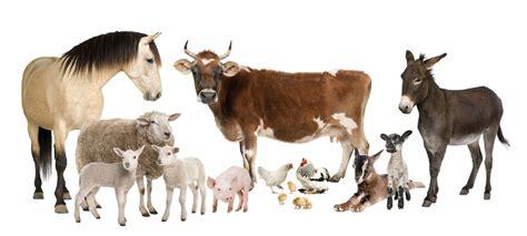 Farm Animals Wallpaper ·① Wallpapertag
