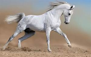 Wallpaper Gallery: Beautiful Horse Wallpaper - 1