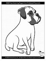 Coloring Boxer Dog Dogs Breeds Animal Soon Being Breed Favorite Added sketch template