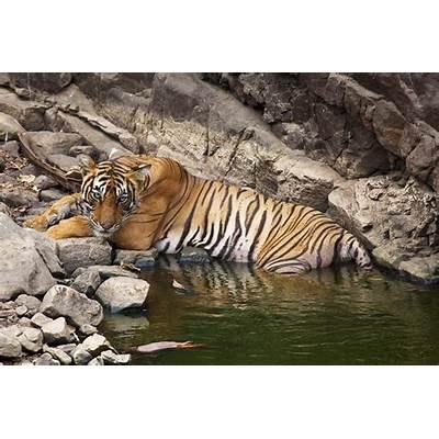 Rajasthan India TourPage 2